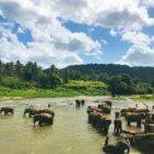 Sri Lanka bij Travelgigant.nl
